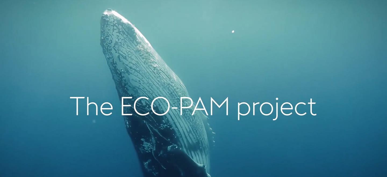 ECO-PAM