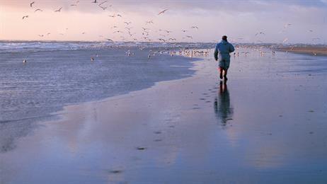 Smartbirds - understanding how gulls behave through high