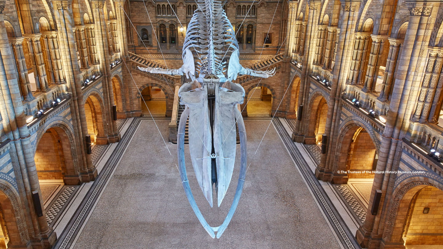 Orsted partnership with the Natural History Museum