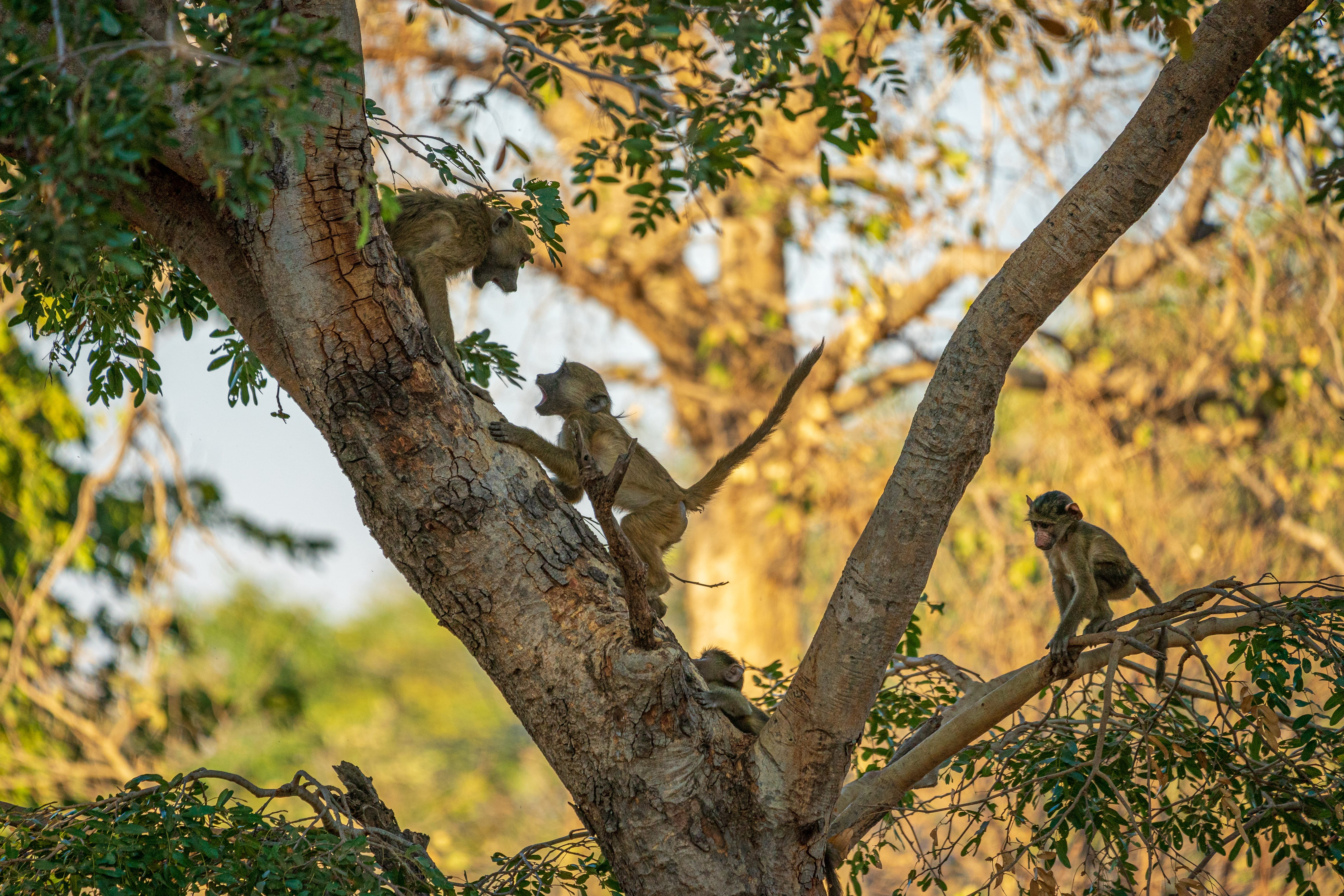 Wildlife Photographer of the Year - Orsted employee winner